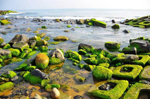 Bờ rêu xóm Rớ - điểm du lịch mới nổi ở Phú Yên.