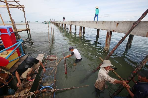 Làng chài Hàm Ninh là điểm đến trong hành trình vòng quanh đảo. Người dân nơi đây sống chất phác, không bon chen. Phần lớn họ bám biển để sống, cuộc sống lặng lẽ không xô bồ. Khách du lịch vẫn tìm đến đây để thưởng thức nhiều loại sản vật của biển. Trong ảnh, một gia đình dựng nhà bè bên cạnh cầu cảng dài 600m để làm du lịch.