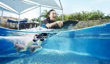 Dolphin Adventure_HR