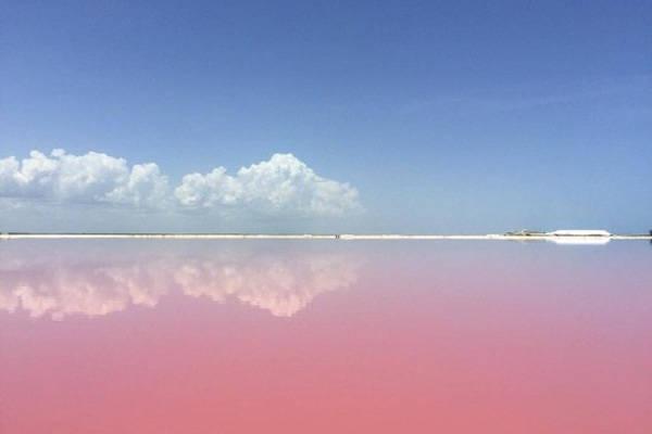 Nhưng thực chất đây chính là sản phẩm của thiên nhiên ban tặng. Màu hồng của nước biển xuất phát từ một loài sinh vật biển nhỏ xíu có chứa một hóa chất có màu đỏ gọi là beta carotene. Các loài động vật biển nhỏ xíu sống trong đầm có chứa một hóa chất có màu đỏ, được gọi là beta carotene.
