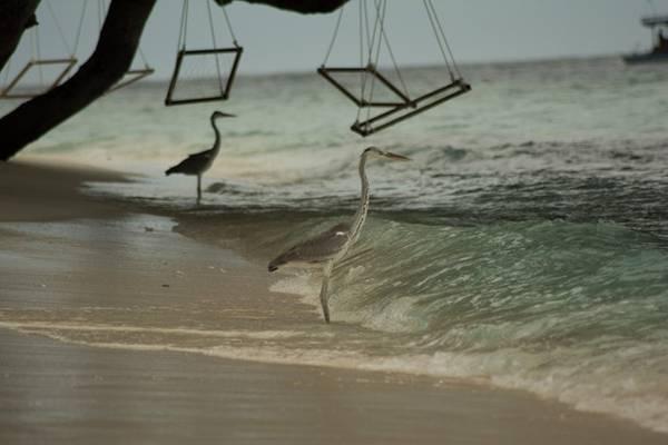 Ngay phía trước nhà nghỉ, dưới tán cây là những chiếc xích đu đung đưa trên mặt biển.