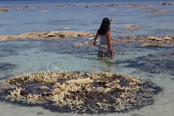 Vườn san hô tại Thinadhool là điều khiến tôi phải hứa với mình nhất định trở lại. Có ba màu san hô phổ biến ở đây là trắng, xanh, và tím nhạt. Ảnh: Maldives thiên đường hạ giới.