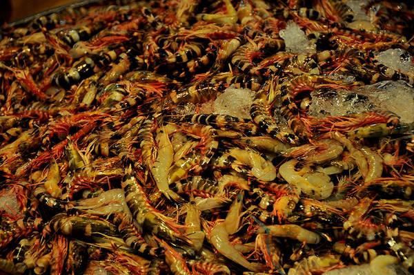 Tôm sắt, loại tôm biển có vỏ cứng nhưng thịt rất ngon và thơm.