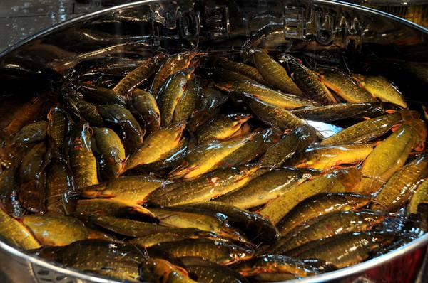 Cá trê vàng hiếm thấy ở các chợ nhỏ nhưng có mặt với số lượng lớn tại chợ Bình Điền.