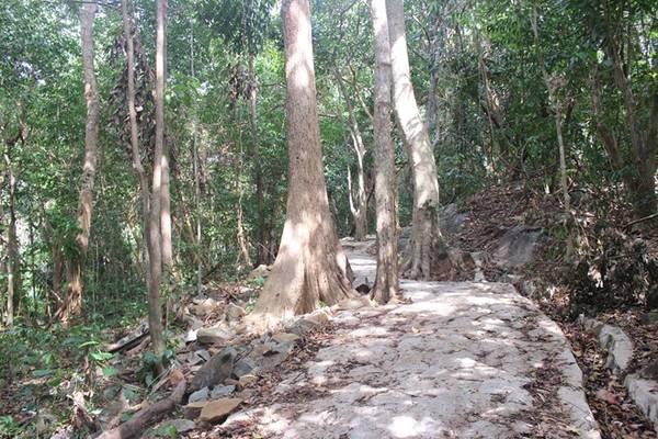 Bạn còn có thể khám phá rừng nguyên sinh ở khu bả o tồn, rồi tận hưởng cảm giác bình yên ở bãi Ông Đụng .