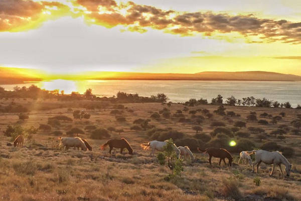 Phương tiện di chuyển hiện nay của người dân nơi đây chủ yếu là ngựa. Vì thế, nếu muốn thử mình chu du trên những cánh đồng cỏ rộng lớn hay dạo quanh bờ biển, du khách có thể thuê ngựa và nhờ sự hướng dẫn của người dân địa phương. Mùa khô ở ở đảo Sumba kéo dài từ tháng 5 đến tháng 11 và mùa mưa từ tháng 12 đến tháng 4, du khách nên lưu ý lựa chọn thời điểm thích hợp để ghé thăm nơi này. Ảnh: Instagram.