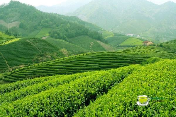 Tân Cương là một vùng đất bán sơn địa được thiên nhiên ban tặng cho một cảnh quan thiên nhiên thoáng đãng, thơ mộng và nên thơ. Ảnh: chethai