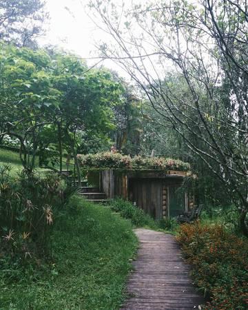 Đường vào ngôi nhà, lan can cầu cũng làm từ gỗ và không gian cây xanh bao phủ.Ảnh:@justin_nguyen1999