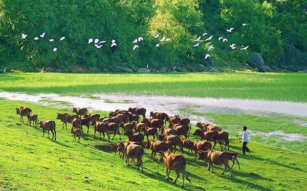 Vùng quê Vân Long mộc mạc, giản dị mà tuyệt đẹp, với hình ảnh cánh cò, đàn trâu. Ảnh: Tuấn Hải Bùi.