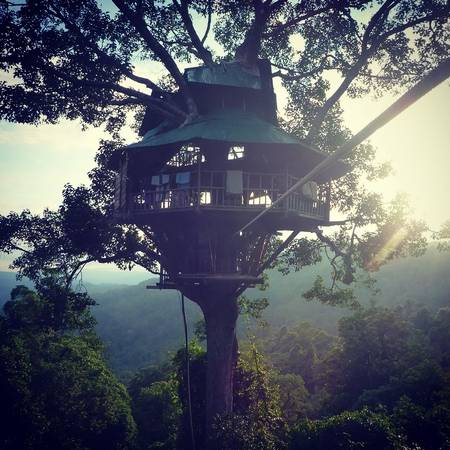 Những ngôi nhà trên ngọn cây độc đáo trong khu bảo tồn Bokeo.Ảnh:@83dayslater
