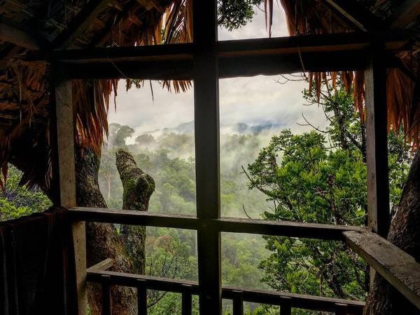 Cánh rừng già ẩn hiện qua ô cửa sổ. Ảnh: eatplaylandon