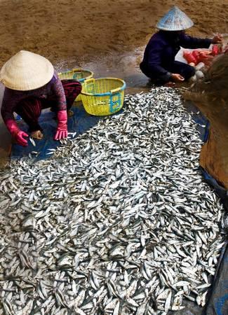 Mọi người đều có việc riêng. Sáng sớm, người dân tập trung ở chợ cá để mua bán những mẻ tôm, cá, mực còn tươi sống. Số đông tập trung vào công việc gỡ lưới, đổ cá vào thùng lạnh, cân cá cho thương lái. Thi thoảng có người đi lượm vài con cái chết ở các mẻ lưới đã gỡ xong.