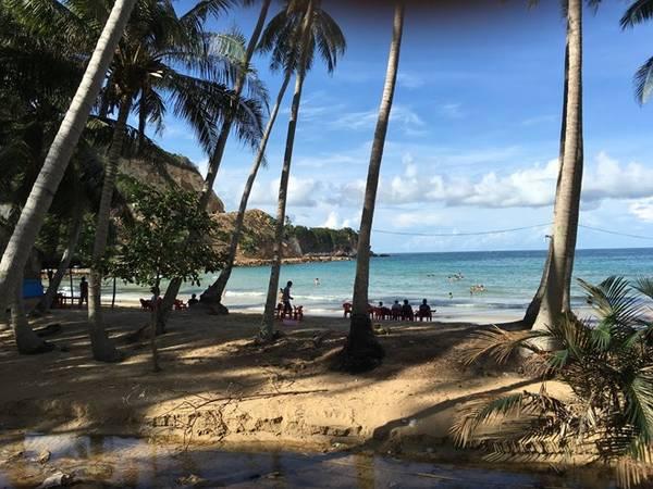 Những hàng dừa vươn ra biển xanh, bạn sẽ có cảm giác như mình đang ở Hawaii.