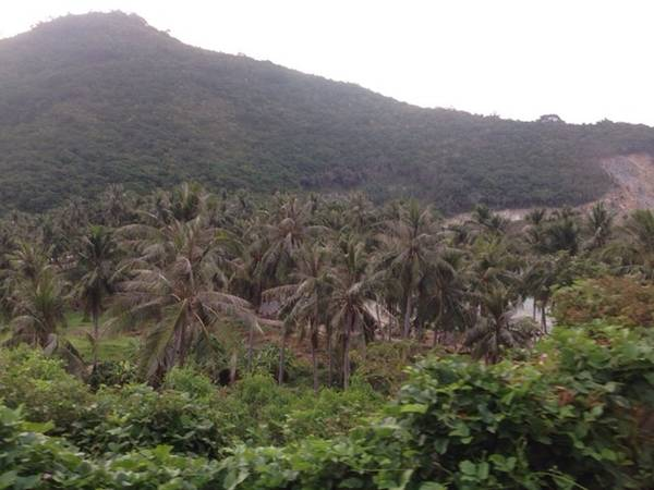 Bạn có thể thưởng thức nước dừa trên đảo. Nước dừa ở đây vị rất đặc biệt hơi có vị mặn, không ngọt như trên đất liền.