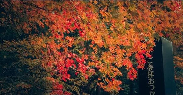 Màu của mùa thu.
