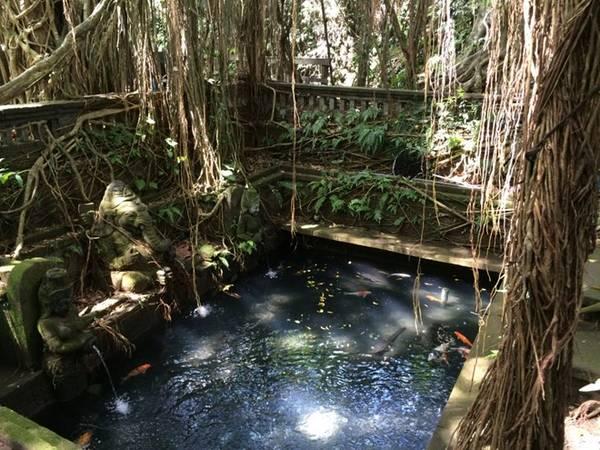 Khỉ ở khắp nơi trong rừng khỉ Ubud.