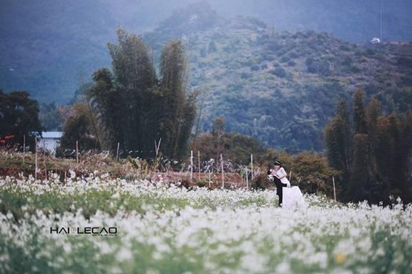 Mộc Châu (Sơn La) là điểm đến lý tưởng để các cặp uyên ương thực hiện bộ ảnh cưới. Mùa đẹp nhất trong năm ở Mộc Châu bắt đầu từ tháng 10, khi ánh nắng mùa thu ấm áp và cải trắng nở rộ khắp sườn đồi.