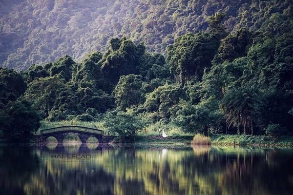 Chụp ảnh cưới tại rừng Cúc Phương, bạn sẽ có cơ hội ghi lại những hình ảnh bên những con đường nhỏ và những hàng cây xanh ngắt. Ngoài ra bạn có thể chọn những bụi hoa rừng nhiệt đới đầy màu sắc. Cúc Phương rất thích hợp cho những cặp đôi ưa khám phá thích hoà mình và thiên nhiên kỳ bí và tươi đẹp.