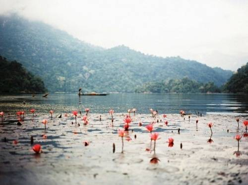 Hồ Ba Bể, Bắc Kạn: Nằm trong danh sách 16 hồ nước đẹp nhất thế giới do trang MSN bình chọn, hồ Ba Bể được bao bọc bởi núi và rừng nguyên sinh. Người dân địa phương gọi Ba Bể là Slam Pé, nghĩa là ba hồ, vì đây là nơi tụ lưu của 3 nhánh sông Pé Lầm, Pé Lù và Pé Lèng. Khám phá hồ Ba Bể cần ít nhất hai ngày, bằng việc thuê thuyền đi trên lòng hồ hoặc trải nghiệm bằng thuyền độc mộc. Ngoài ra, khám phá các hang động và chiêm ngưỡng dòng thác hùng vĩ ở thượng nguồn cũng là những trải nghiệm thú vị. Ảnh: Nav89