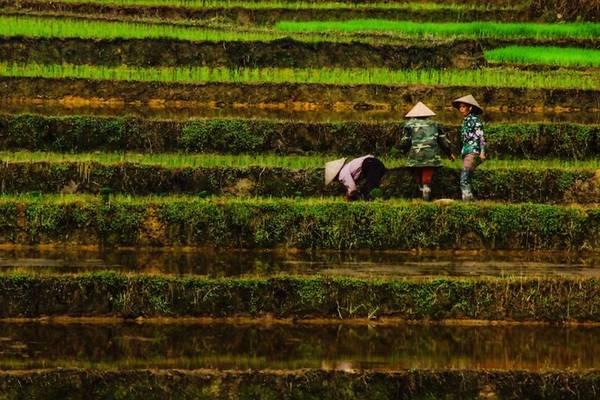 Các nhiếp ảnh gia Thổ Nhĩ Kỳ cũng có cơ hội đến với nhiều cảnh đẹp khác của Việt Nam, trải nghiệm hoạt động sinh hoạt trong đời sống hàng ngày. Trên đây là hình ảnh cấy lúa của những phụ nữ trên các thửa ruộng bậc thang. Hình do nhiếp ảnh gia Banu Cihan chụp.