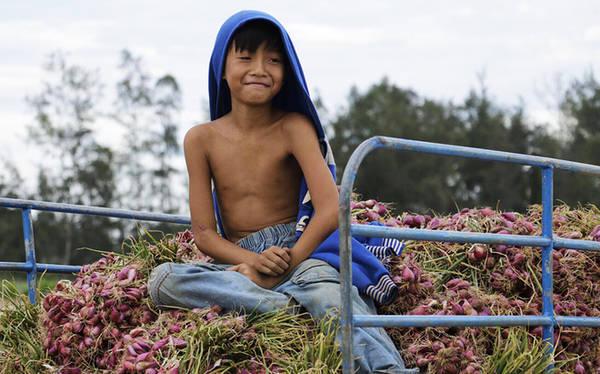 Vào cuối mùa thu hoạch, trẻ em được nghỉ hè nên cùng cha mẹ ra đồng thu hoạch hành. Củ hành tươi được buộc thành từng chùm, củ to cỡ ngón tay, mỗi bụi hành có đến vài chục củ.