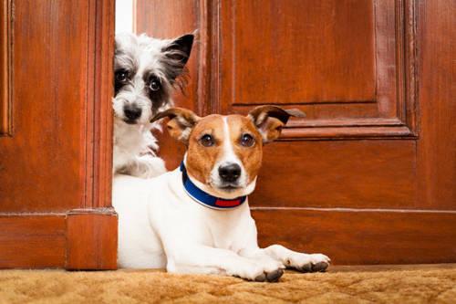 Hà Lan là đất nước không có chó, mèo bị bỏ rơi: Theo Brightside, Hà Lan đã xác nhận về việc không có bất kỳ con chó hay mèo nào đang vô gia cư ở đất nước mình. Chúng đều được các gia đình nhận nuôi. Chính phủ cũng quản lý và quan tâm đến các loại vật nuôi này, để chúng không bị tổn hại. Các nhà chức trách đưa ra điều luật nghiêm khắc trong việc chống lạm dụng động vật.