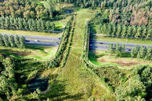 Xây đường riêng cho các động vật hoang dã: Người Hà Lan rất có ý thức bảo vệ thiên nhiên hoang dã. Khi xây đường cao tốc xuyên rừng, họ thậm chí còn làm đường riêng cho các loài động vật hoang dã, để chúng có thể dễ dàng đi từ khu rừng này sang khu rừng khác mà không bị ô tô tông vào.