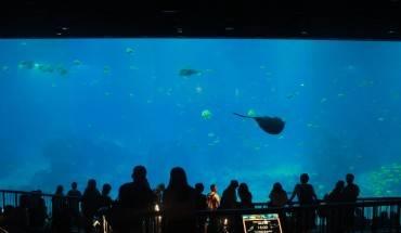 Cả thế giới đại dương rộng lớn nằm trong tầm mắt, mang đến cảm giác rất thực.