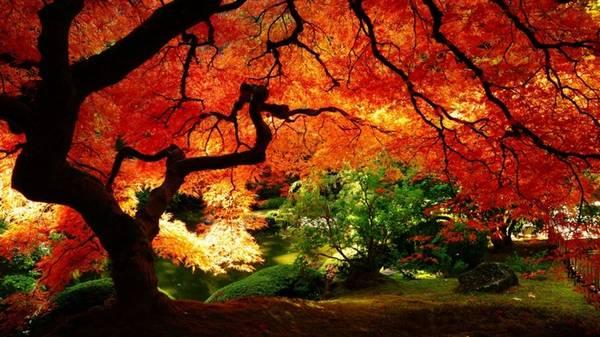 Một tán cây thay màu đầu tiên trong cả khu rừng ở New England, Mỹ tạo nên khung cảnh lãng mạn, huyền ảo.