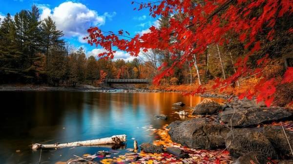 Cây phong lá đỏ là tượng trưng của đất nước Canada, có lẽ bởi thế mà không khó lý giải vì sao mùa thu là thời điểm được du khách yêu thích nhất ở đây.