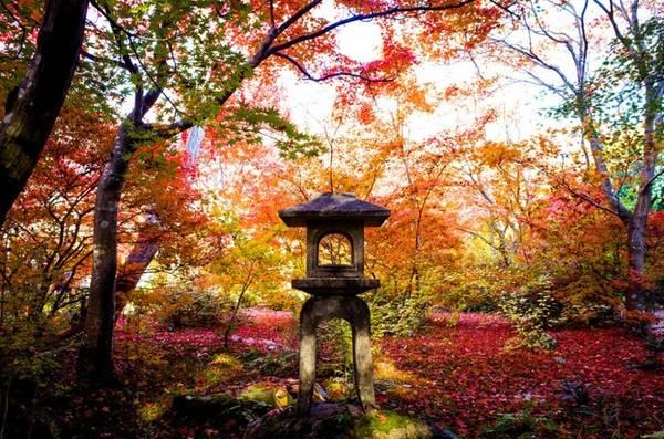 Ngoài mùa hoa anh đào, du khách đến Nhật còn mê mệt bởi mùa thu lá đỏ, vàng, cam bao trùm khắp đất nước, trong đó phải kể đến các thành phố nổi tiếng với khách du lịch như Kyoto, Osaka...