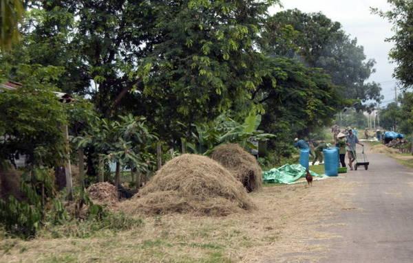 Các con dường ven lộ đều biến thành sân phơi trong mùa gặt - Ảnh: Trung Oanh