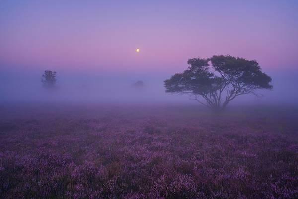Khung cảnh như được chụp tại thảo nguyên hoang dã Savanna nổi tiếng ở châu Phi.