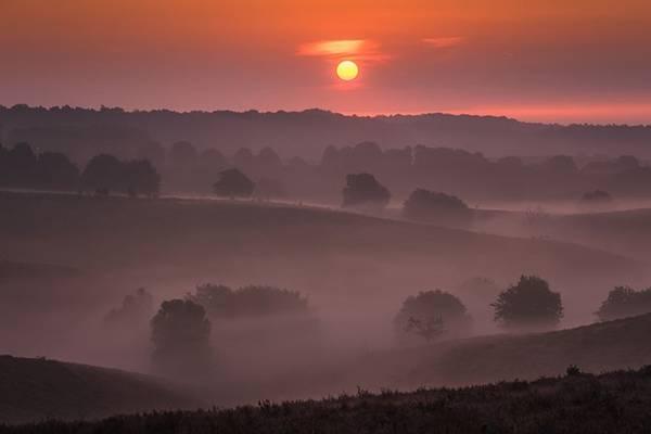 Thời điểm mặt trời vừa lên và sương mù còn dày là lúc thích hợp nhất để chụp ảnh phong cảnh. Bạn có thể phải dậy sớm, nhưng sẽ nhanh chóng quên ngay sự mệt mỏi khi rảo bước trên đồng hoa tím và ngắm bình minh.