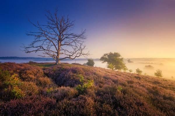 Một cây cổ thụ đã chết từ lâu, nhưng vẫn đứng sừng sững, nổi bật trong khuôn hình của các nhiếp ảnh gia.