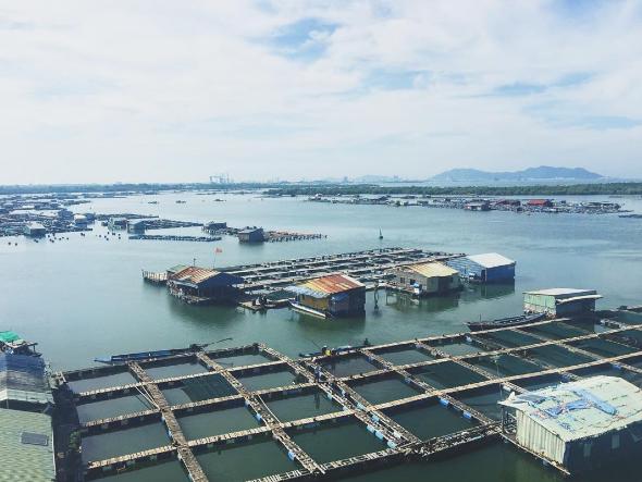 Người dân ở Long Sơn chủ yếu là nuôi trồng hải sản.