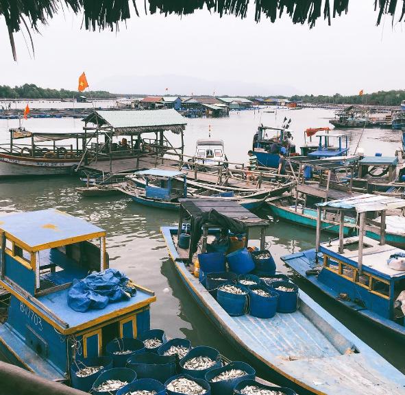 Tàu bè ra vào tấp nập để vận chuyển hải sản đi tiêu thụ.