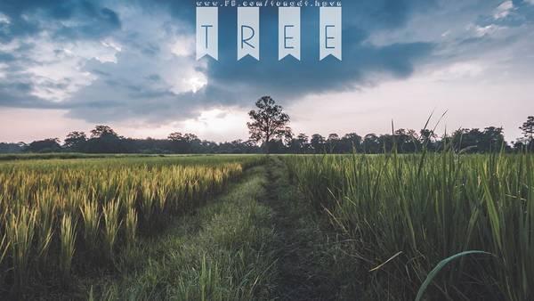 lao-co-mot-noi-binh-yen-o-ngay-canh-viet-nam-ivivu-8