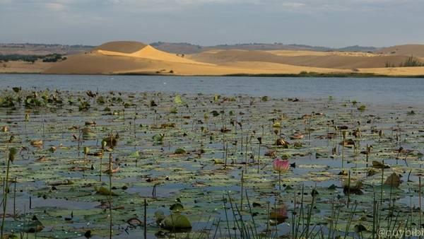 Bàu Sen (hay còn gọi là Bàu Trắng) - hồ nước tự nhiên giữa triền cát trắng.