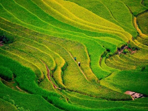 Đường đi Hoàng Su Phì khó khăn hơn nhiều so với những điểm đến ngắm lúa khác ở miền Bắc như Mù Cang Chải hay Sa Pa. Có 2 ngả để đến đây nhưng đường nào cũng trên 300 km với nhiều đèo dốc ngoằn ngoèo. Ảnh: Nguyễn Hương Giang.