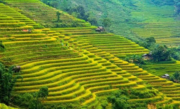 Đường lên Hoàng Su Phì chia theo hai ngả, từ đường quốc lộ 2 qua Tuyên Quang đến Hà Giang đi xuyên vào, hay từ phía đường Bắc Hà (Lào Cai) qua Xín Mần. Ảnh: Vũ Chi.
