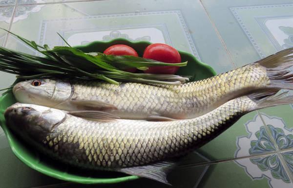 Cá trôi vừa được đánh bắt - Ảnh: MINH KỲ