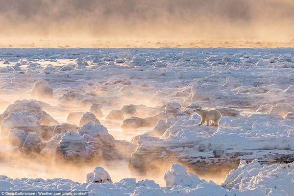 Greg Gulbransen đã tiết kiệm tiền trong 4 năm để thực hiện chuyến đi tới Manitoba, Canada, nơi anh ghi lại khoảnh khắc ấn tượng trên băng. Anh đã đoạt giải nhất cuộc thi It's Amazing Out There của The Weather Channel, với giải thưởng 15.000 USD.
