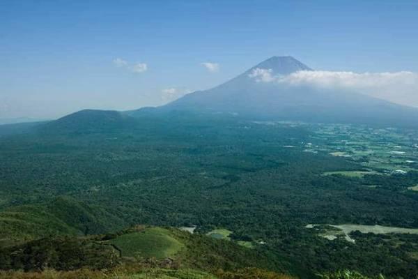 Rừng Aokigahara - Ảnh: fascinant-japon