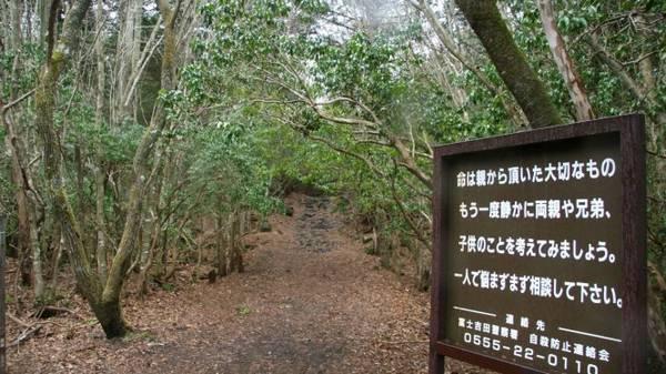 """Biển báo kêu gọi sự thức tỉnh của người muốn tự tử như """"Cuộc sống là điều quý giá"""", """"Hãy nghĩ đến những người yêu thương bạn"""", """"Tự tử không phải là một giải pháp đúng đắn""""... được đặt ở các lối vào và bên trong rừng Aokigahara - Ảnh: wp"""
