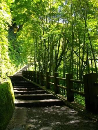 Đường dẫn vào thác Shiraito no Taki - Ảnh: unblog