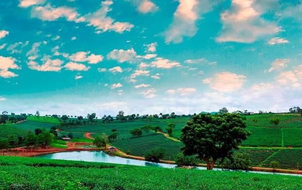 Màu xanh của bầu trời, của cây, hồ nước tại đồi chè Bảo Lộc khiến du khách không muốn rời đi.