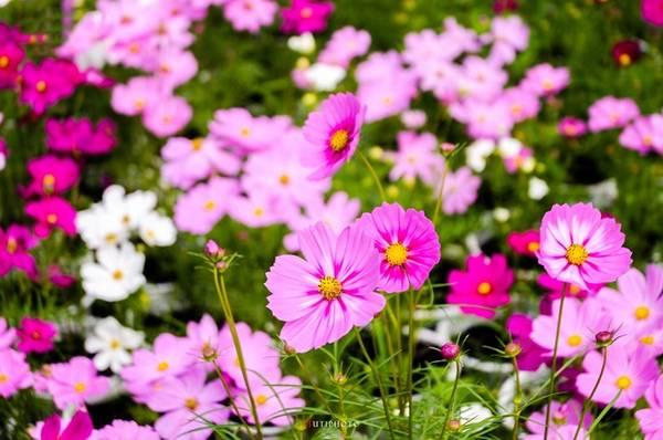 Dù thời điểm nào trong năm, vườn hoa Sa Đéc cũng chào đón du khách với những sắc hoa rực rỡ.