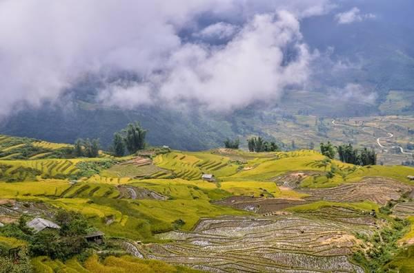 Màu sắc đối lập của những ô ruộng bậc thang đã gặt xong, và đang chờ thu hoạch ở Y Tý, Lào Cai.