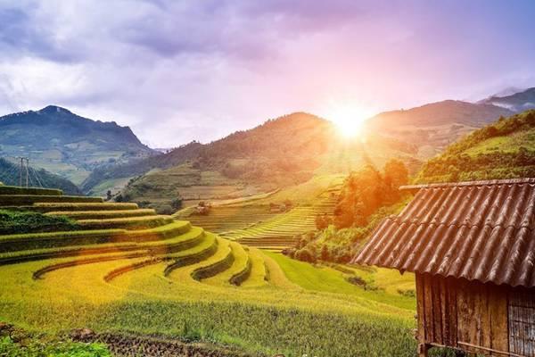 Ruộng bậc thang Mù Căng Chải, Yên Bái, rực rỡ trong ánh nắng ban mai.
